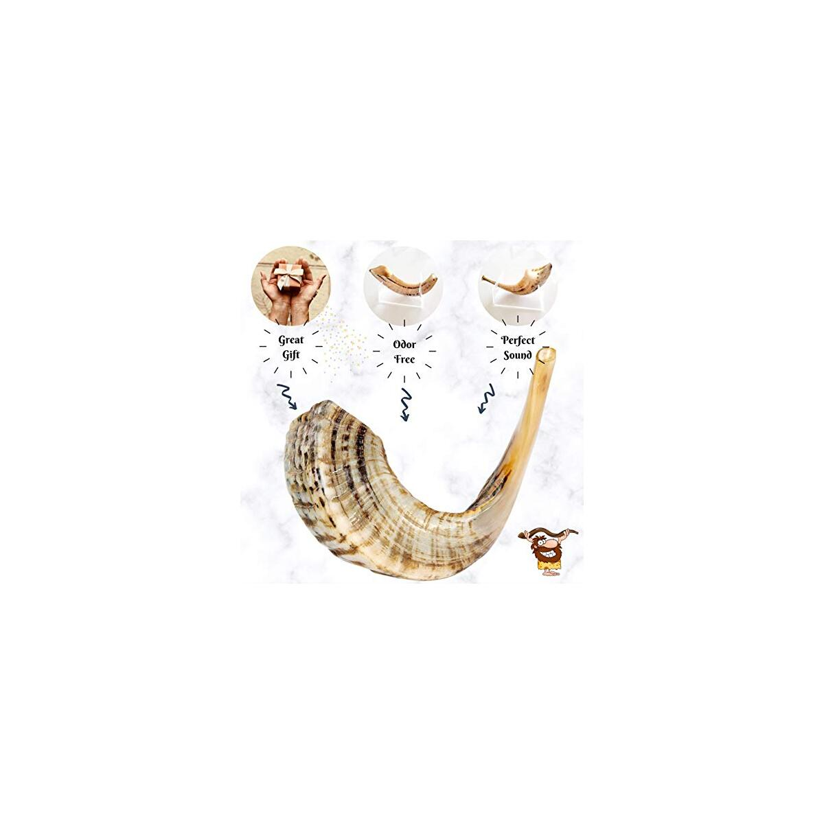 BabaShofar Ram Shofar Polished Natural Odorless Size 12