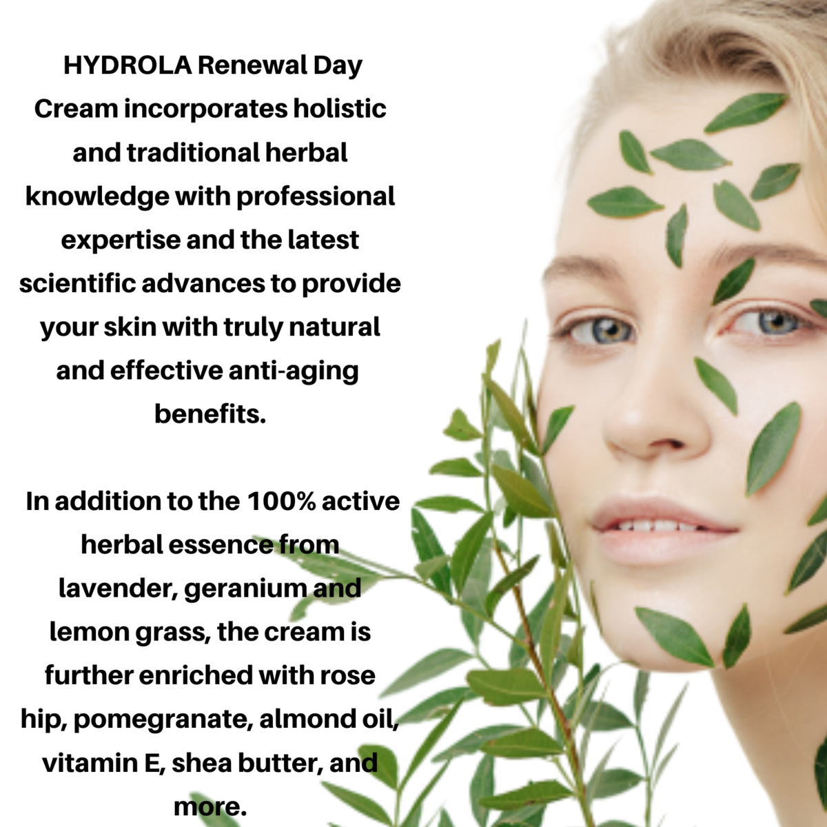 HYDROLA RENEWAL DAY CREAM: best natural & organic daily face moisturizer cream. Anti-aging & anti-wrinkle cream. With vitamin E, shea butter, pomegranates, almonds and rose hip oils
