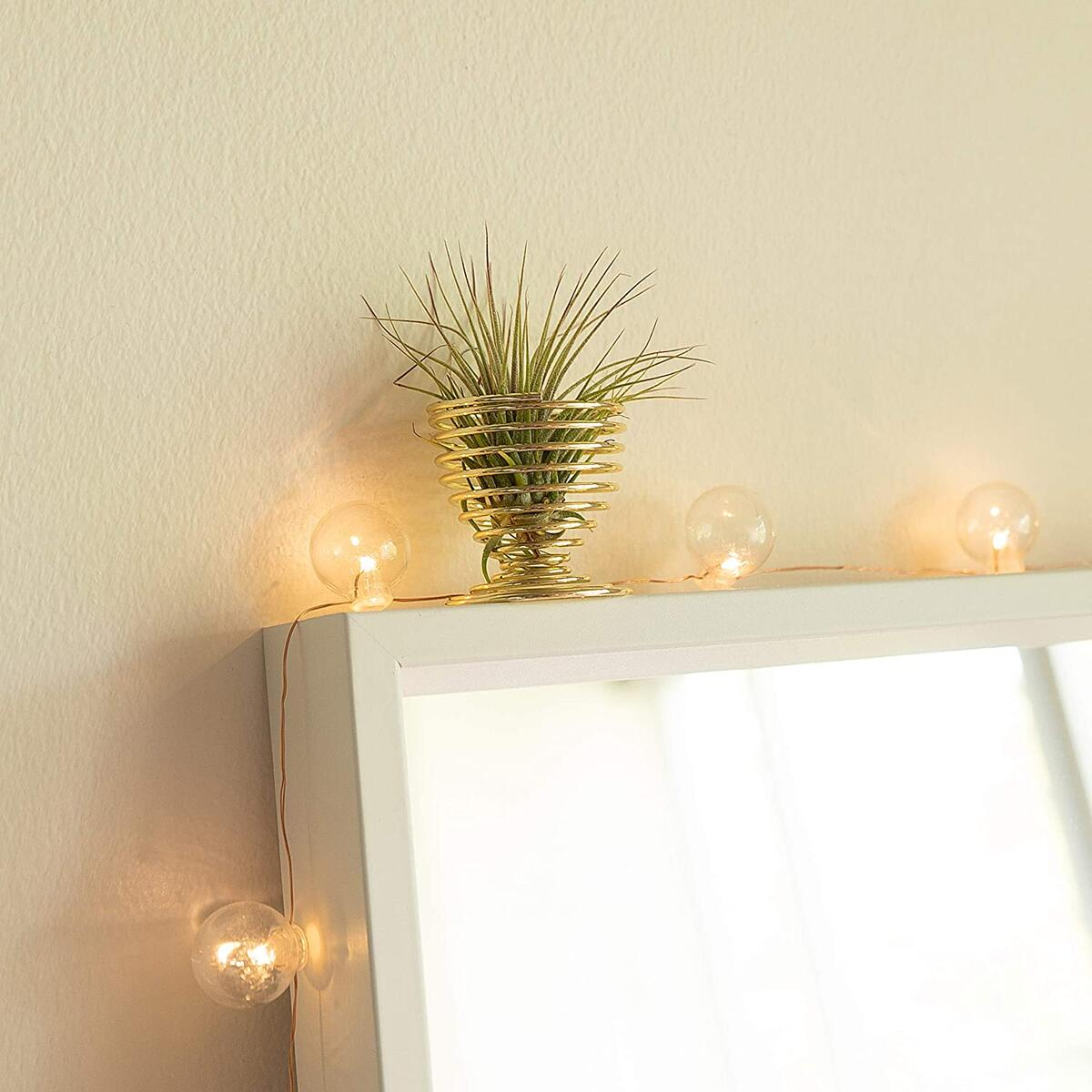 Air Plants Holders - Gold - Pack of 4