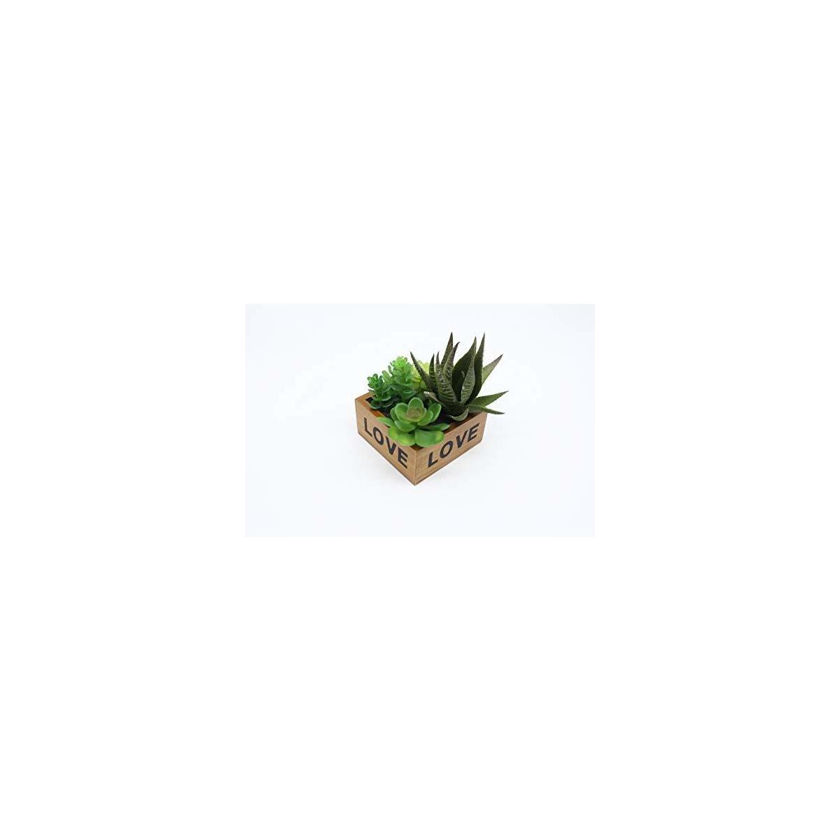 succulent love display