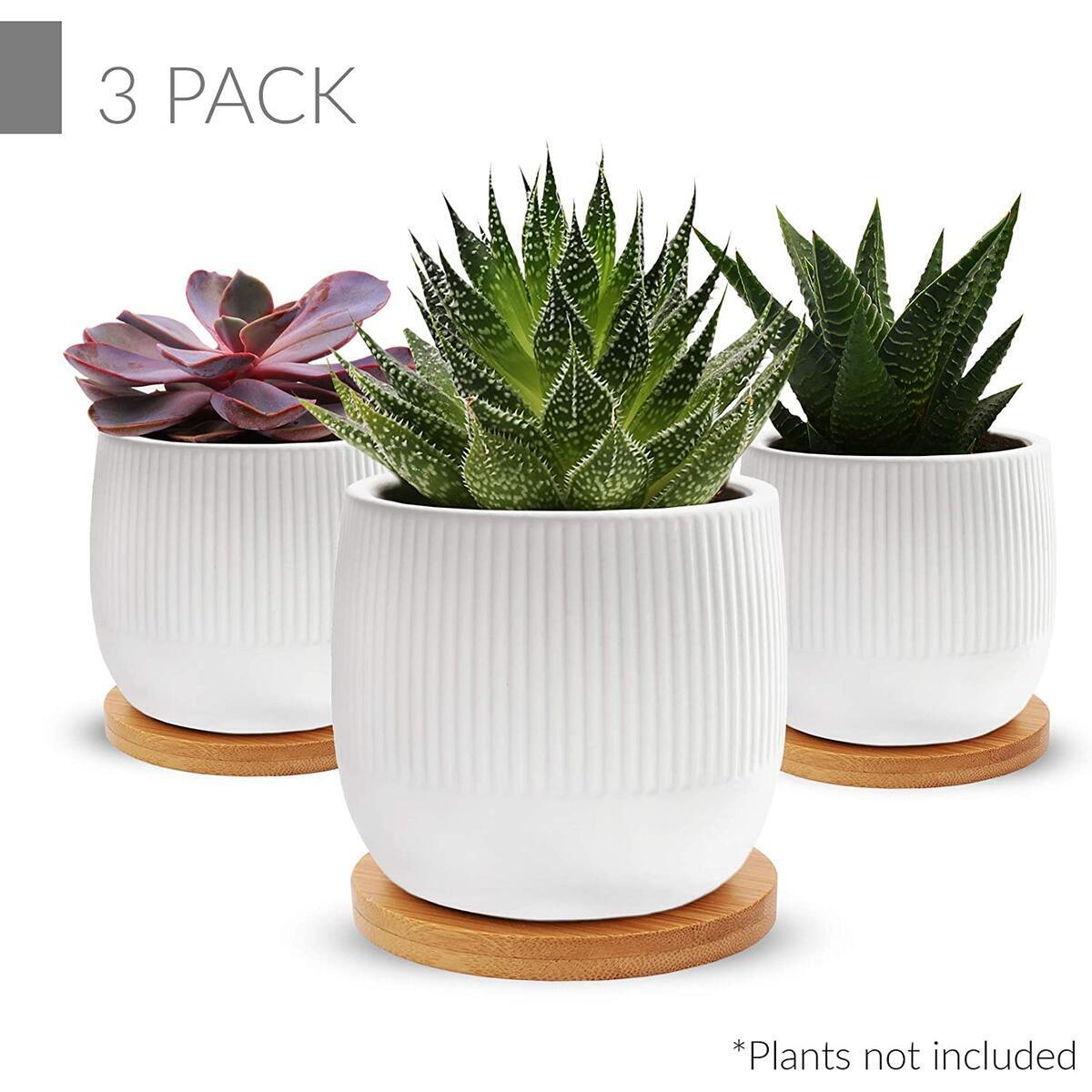 Succulent Planter Pots 2.75 inch | Ribbed Pattern| Set of 3| Ceramic Matt Stoneware| White Mini Cactus pots with Drainage Trays| for Home or Office Decor| Plants not Included.