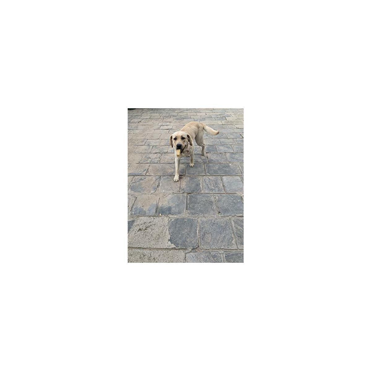 Tibetan Dog Chew Yak Cheese Himalayan Chew - Size: Large 1 Pound