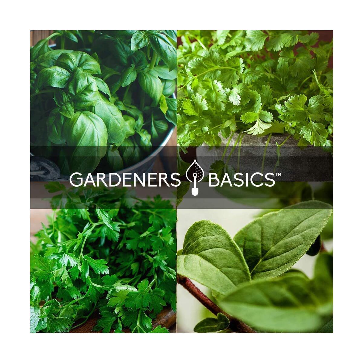 Culinary Herb Set