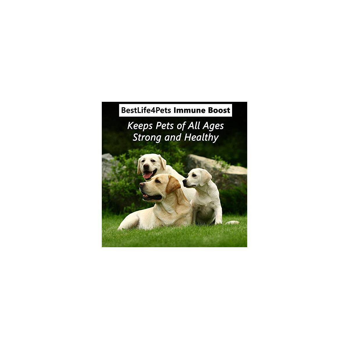 Immunity Boost for Dogs – Strengthens Respiratory and Immune System, Helps Your Canine Ward Off Kennel Cough and Infection