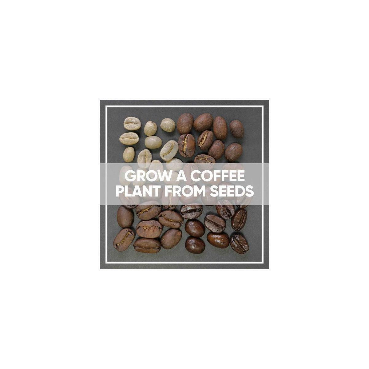 Grow Your Own Coffee Plant Kit (Pack of 2) Arabica Coffee Complete Growing Kit, 4