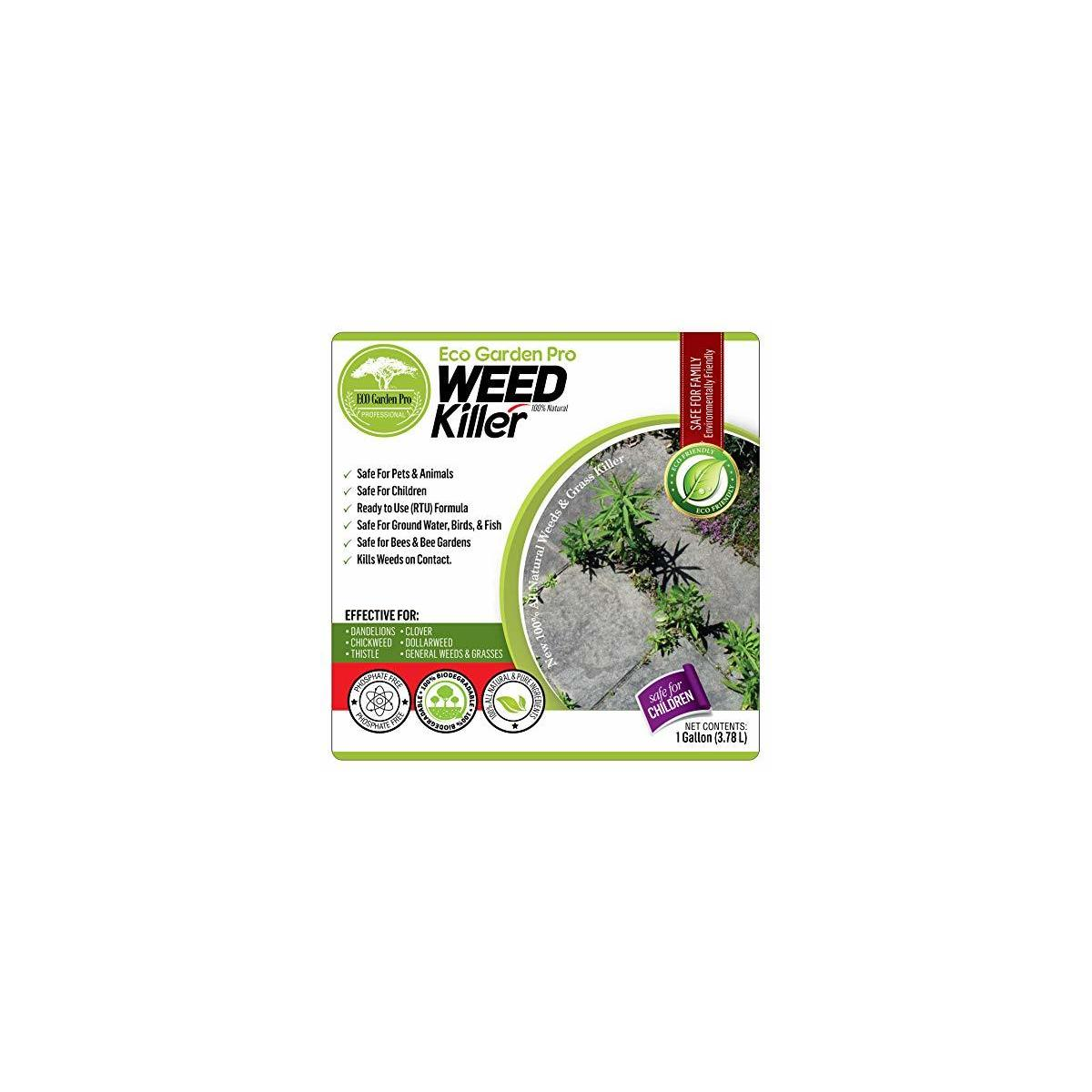 ECO Garden PRO - Organic Vinegar Weed Killer | Kid Safe Pet Safe | Clover Killer for Lawns | Moss Killer | Green Grass & Poison Ivy Killer | Spray Ready Glyphosate Free Herbicide (1 Gallon)… B07TSHB427