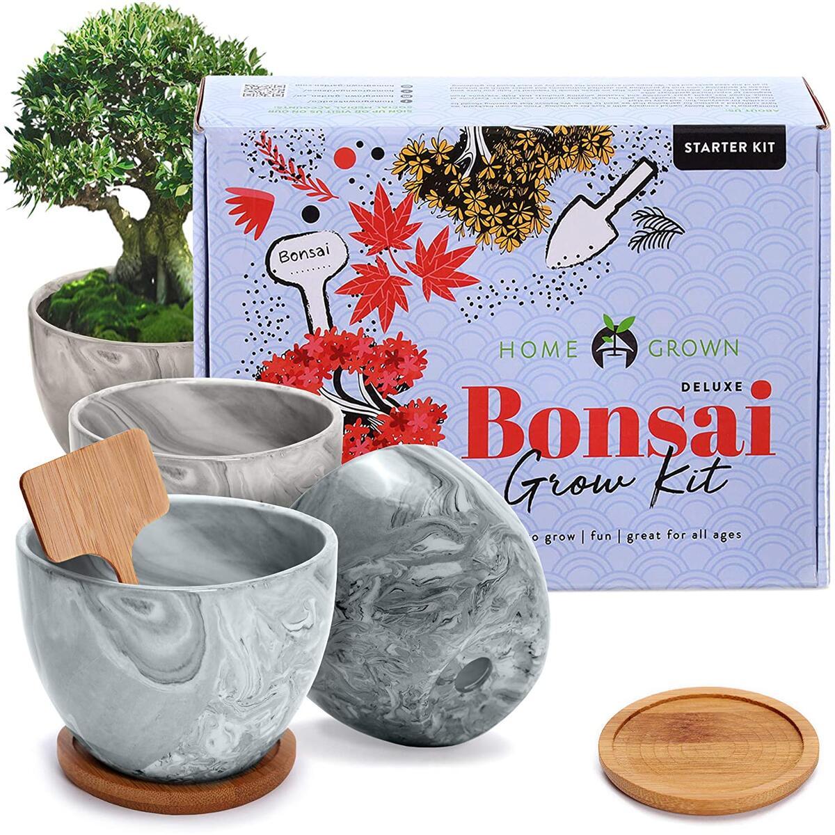 Bonsai Kit Cashback Rebates Rebatekey