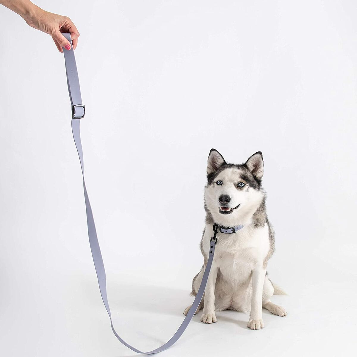 Heavy Duty Dog Leash & Collar Set | Blue Berry Lilac 6FT-Nylon Dog Leash Comfortable Handle, Water Resistant, Easy Hook Collar | Blue Berry Lilac Sturdy Leash and Collar for Medium & Large Dog Breeds